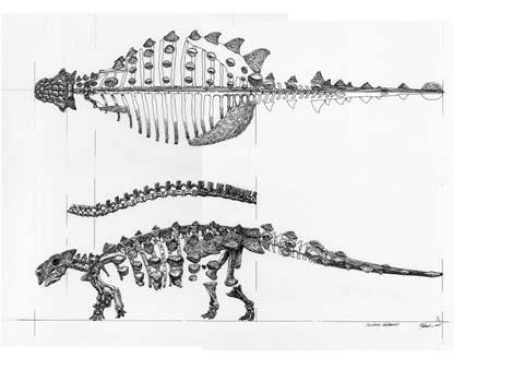 saichania-skeleton2b.jpg