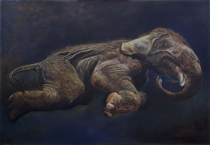 アジアゾウの死産胎子