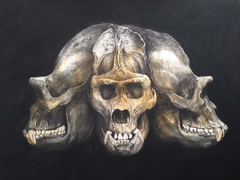Gorilla Asura skull