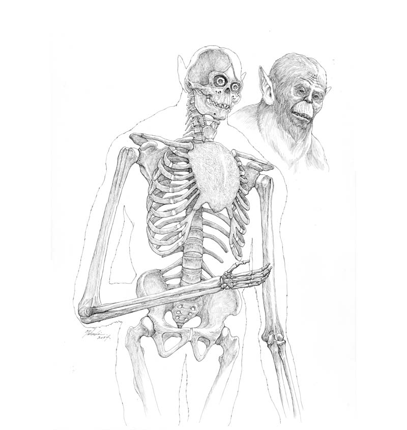 獣の巨人の骨格図