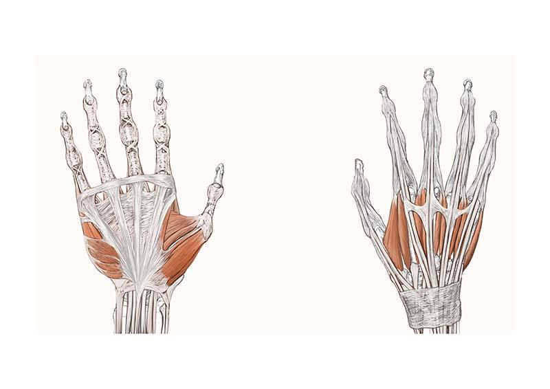手の筋肉図スライド