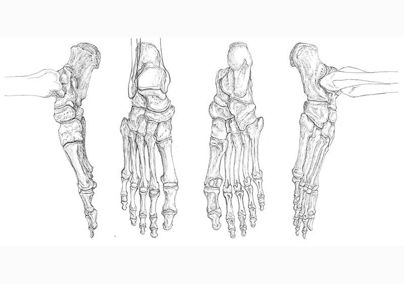 足の筋肉図スライド