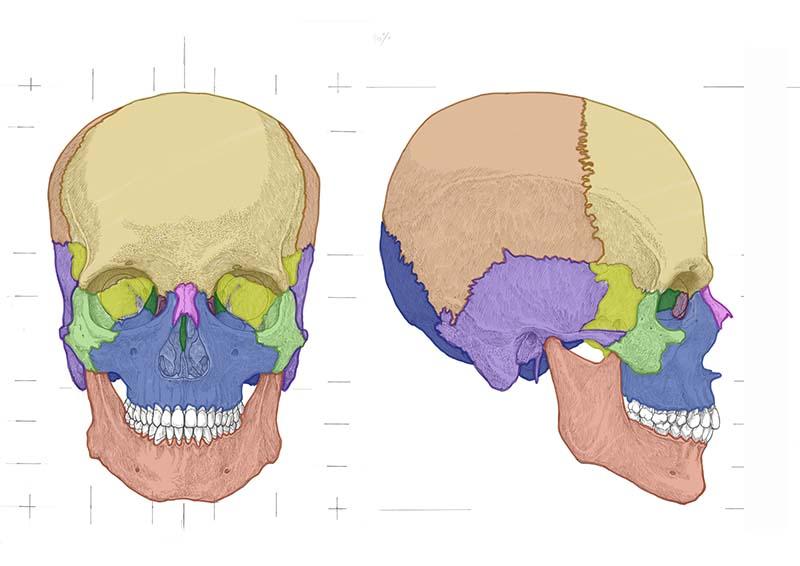 頭蓋骨スライド