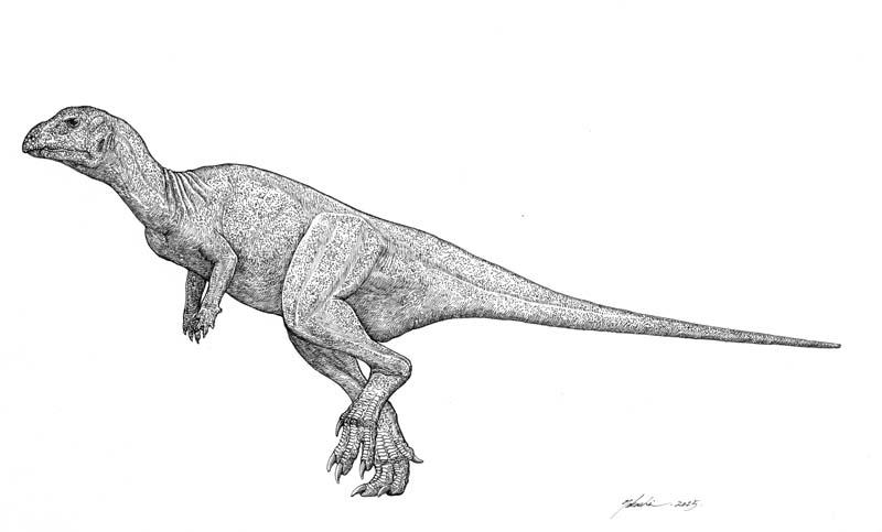 Hypsilophodon foxii