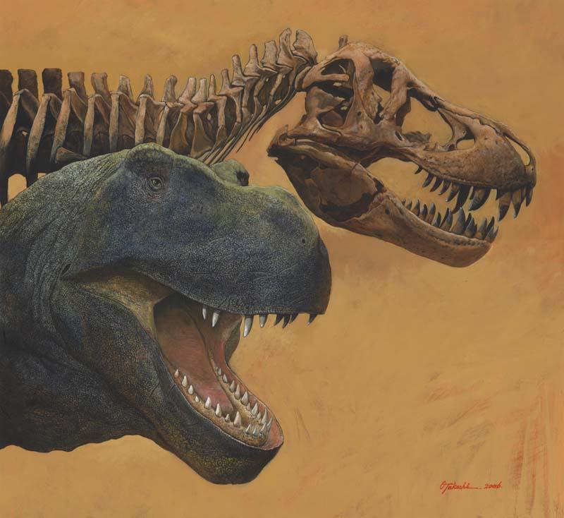 Tyrannosaurus rex head and skull