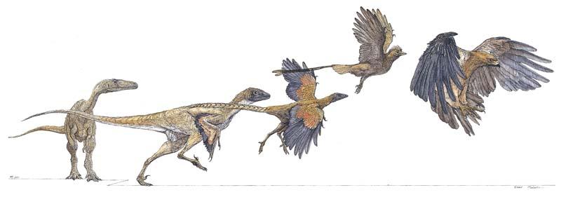 肉食恐竜から鳥へ