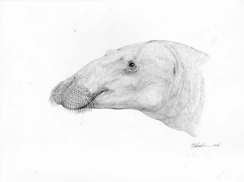 Desmostylus