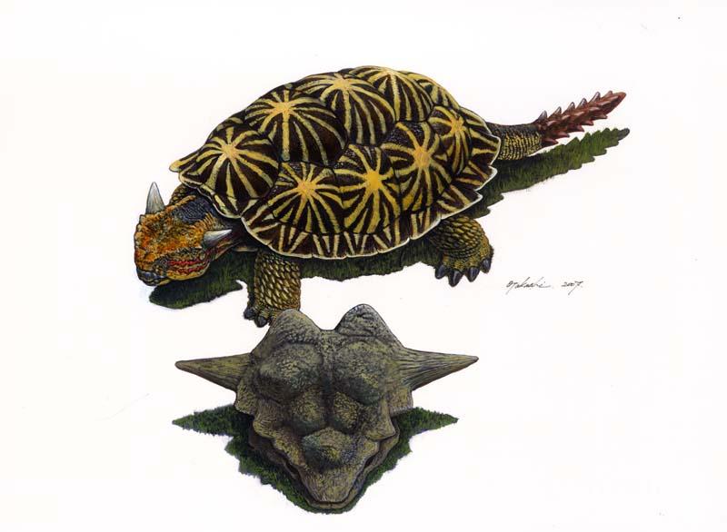 メイオラニア Meiolania
