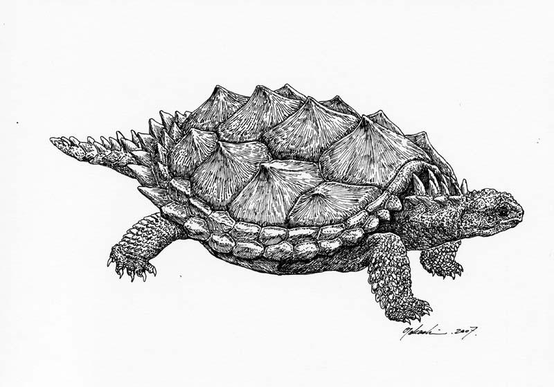 プロガノケリス Proganochelys quenstedtii