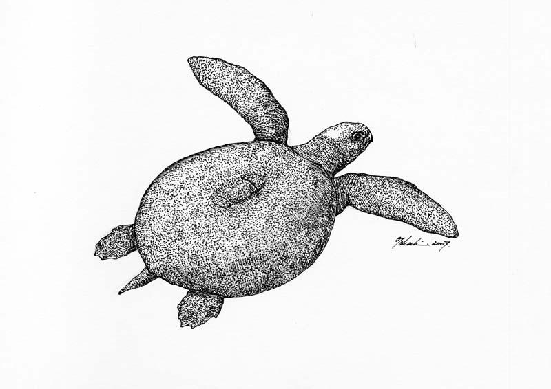 メソダーモケリス Mesodernochelys undulatus