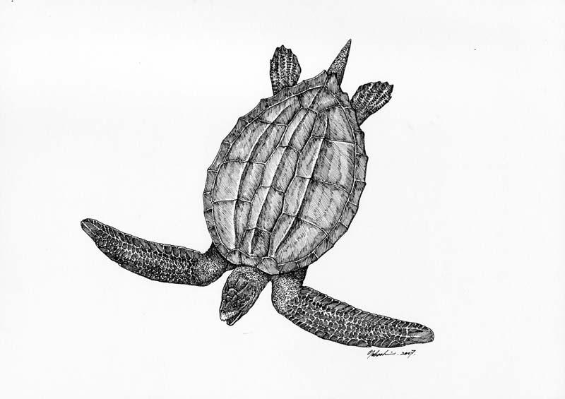 シーロムス Syllomus