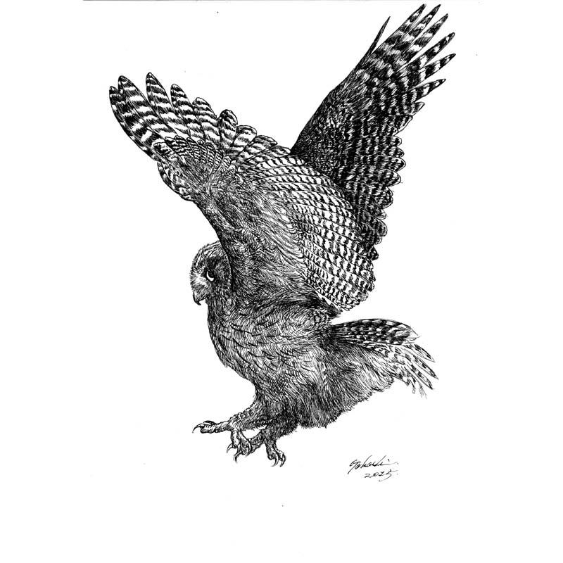 シマフクロウ